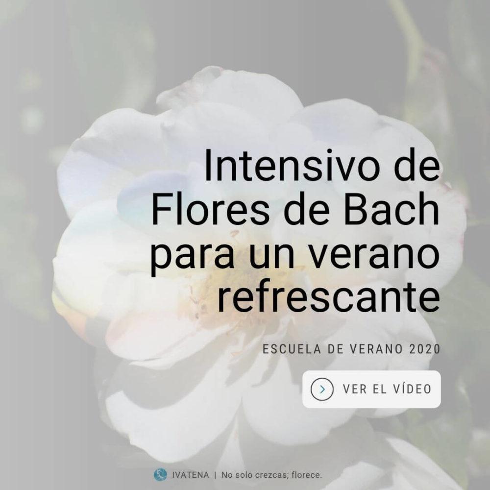 Curso intensivo de Flores de Bach
